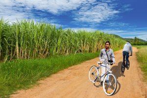 Sugarcane fields at Jakson Inns Phaltan